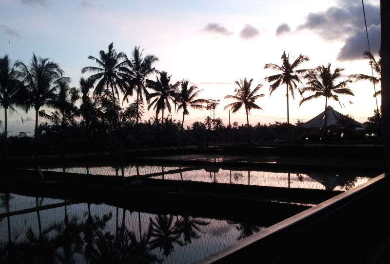 Coucher de soleil à Ubud